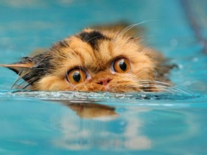 cat treading water